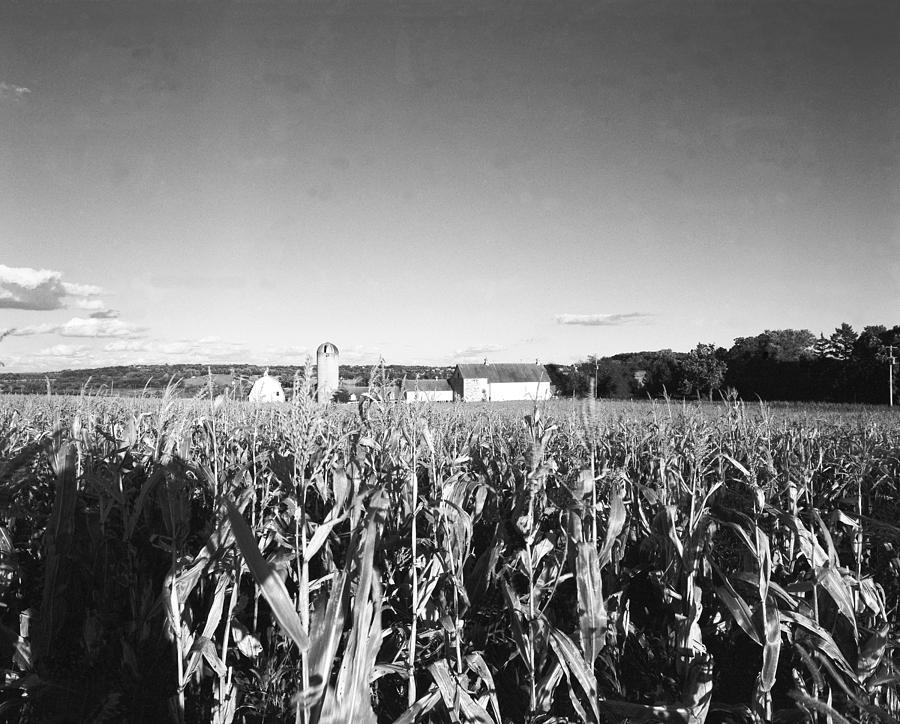 Wisconsin Photograph - How Corny by Jan W Faul