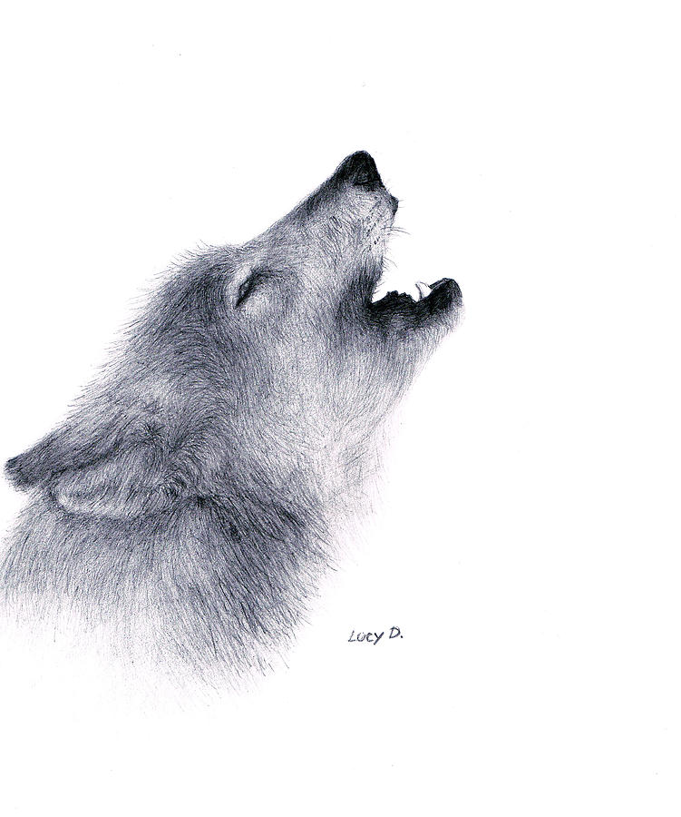 Wolf Drawing - Howl by Lucy D