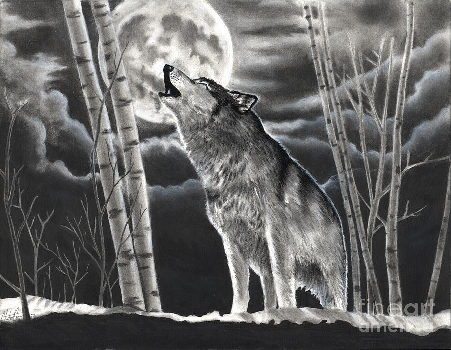 Howling At The Moon Drawing by - 129.1KB