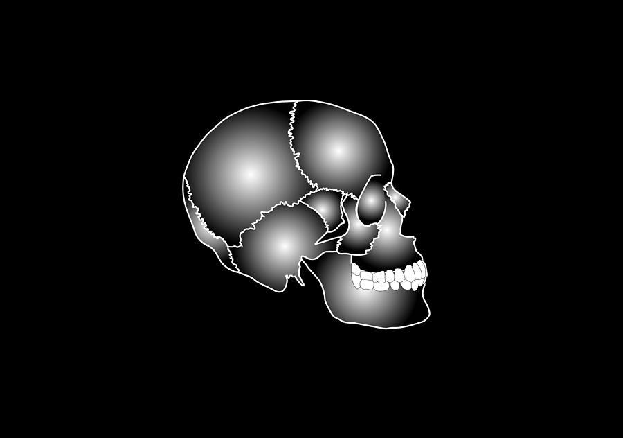 Skull Photograph - Human Skull Anatomy, Artwork by Francis Leroy, Biocosmos