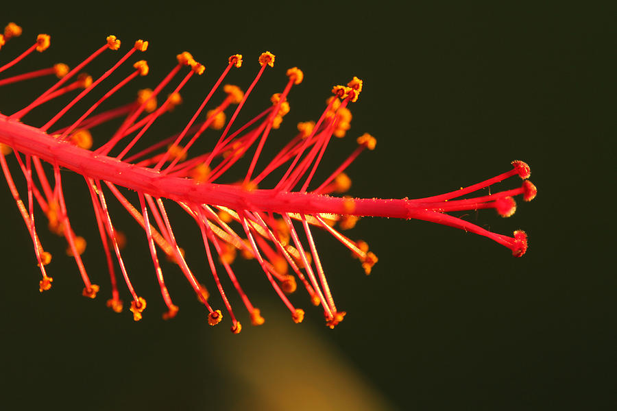 Red Flower Photograph - Hummers Delight by Jose Rodriguez