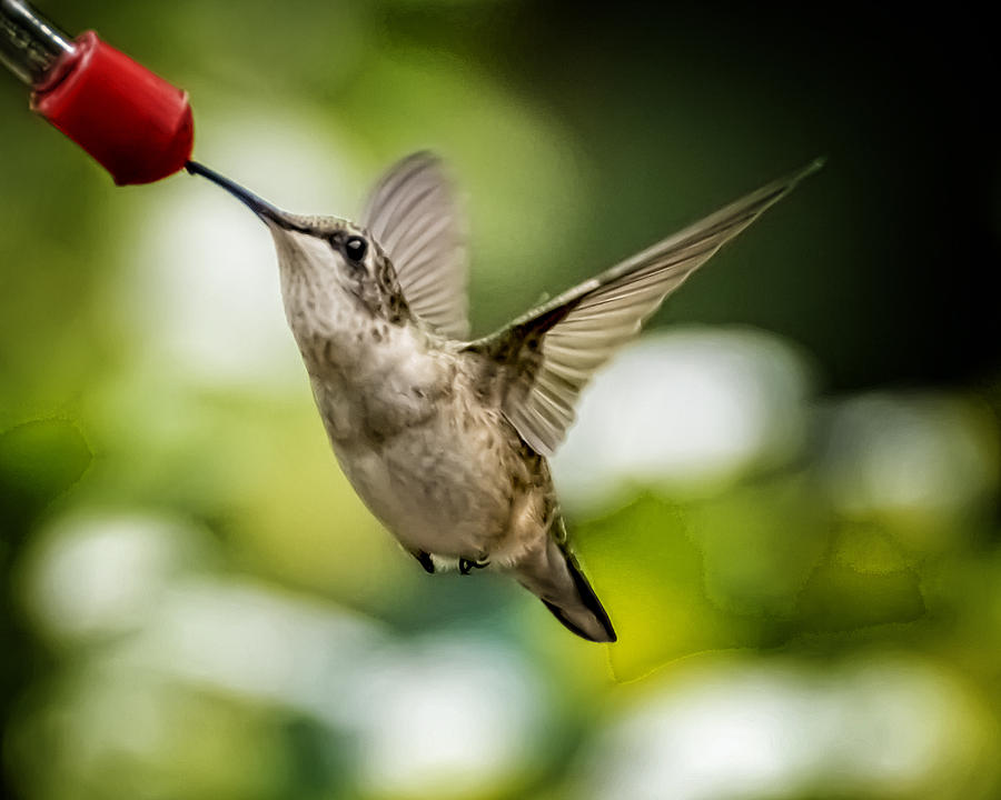 2012 Photograph - Hummers In The Garden Two by Michael Putnam