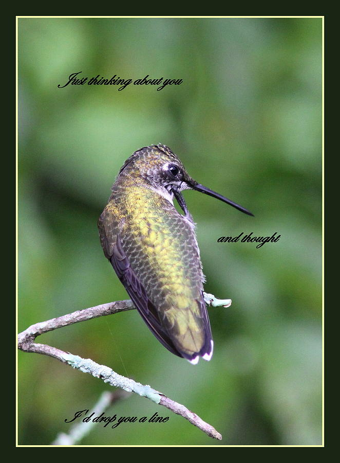 Hummingbird Photograph - Hummingbird - Thinking Of You by Travis Truelove