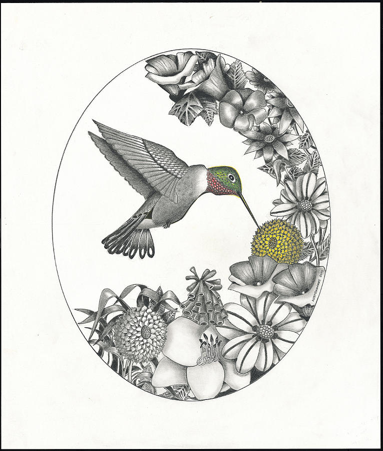 Hummingbirds And Flowers Drawing Hummingbirds And Flowers Drawings