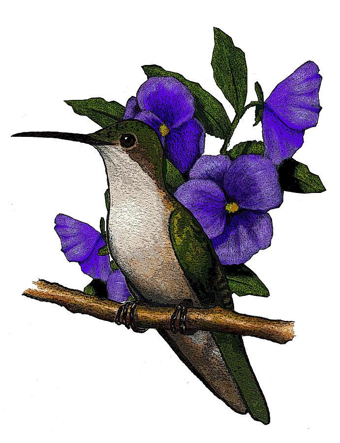 Hummingbird With Pansies Drawing by Joyce Geleynse