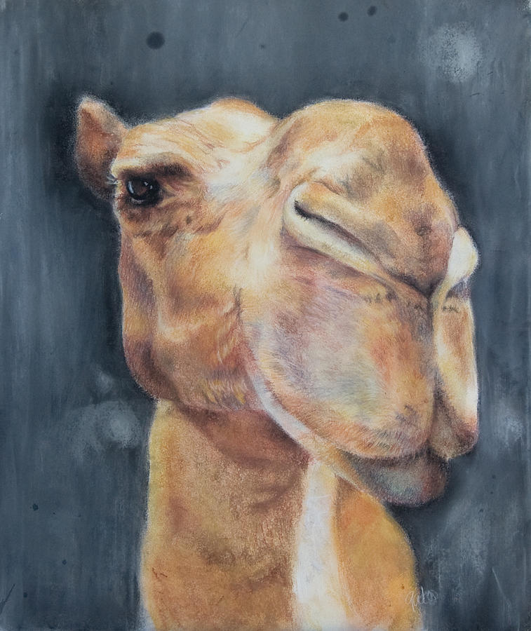 Camel Pastel - Humphry by Joanna Gates