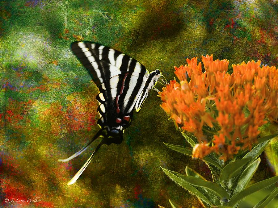 Walker Digital Art - Hungry Little Butterfly by J Larry Walker