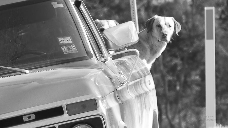 Black And White Dog Photograph - Hurry Up Please by Teresa Dixon