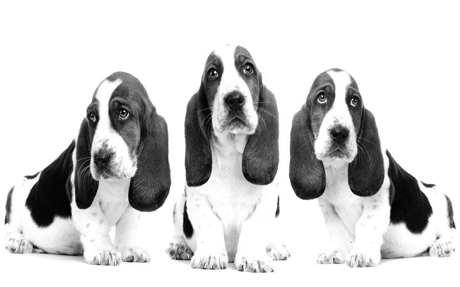 Hush Puppies Photograph By Sumit Mehndiratta