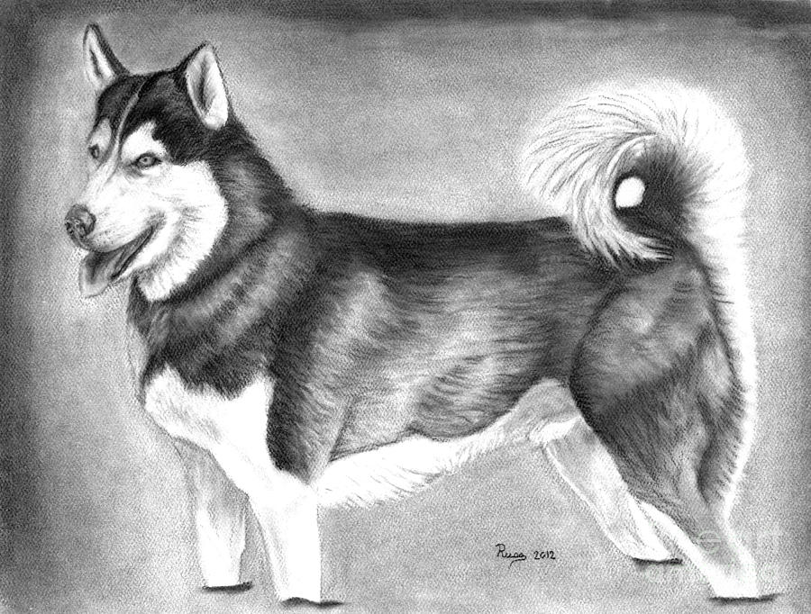 Husky Drawing - Husky  by Russ  Smith