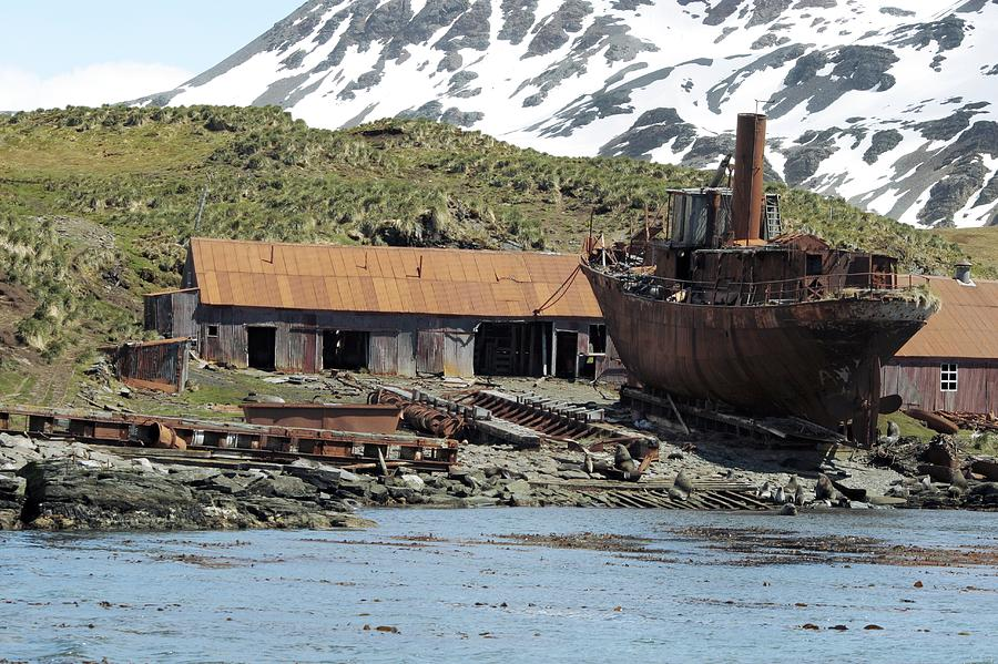 Husvik Whaling Station South Georgia Photograph By