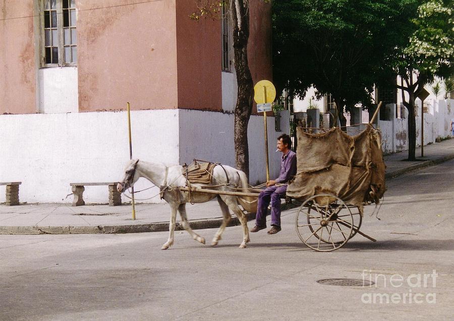 Horse Photograph - I Am My Own Boss by John Malone