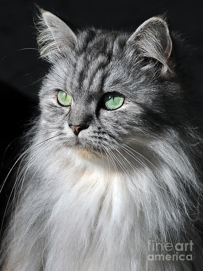 Cats Photograph - I Am Not Amused by Graham Taylor