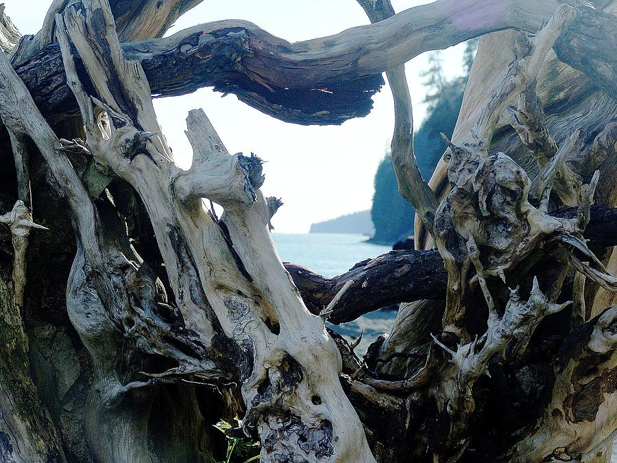 Driftwood Photograph - I Came From Out There by George Cousins