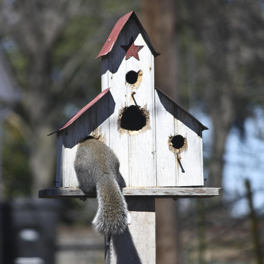Squirrel Photograph - I Can Almost Fit by Teresa Mucha