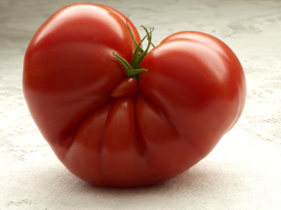 I Love Tomatoes Photograph by Sharon Talson