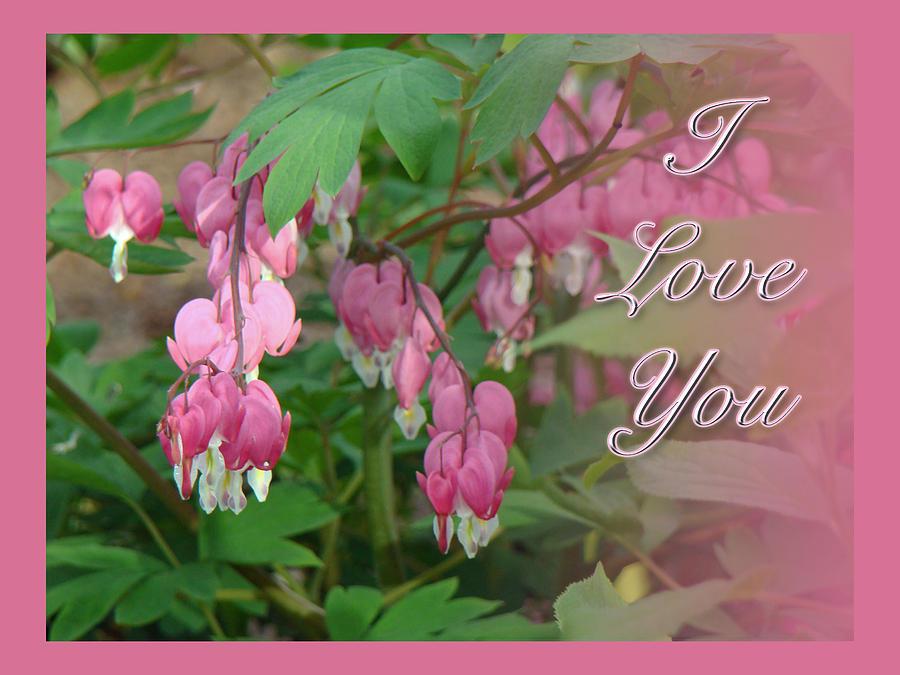 I love you greeting card floral bleeding heart photograph by love photograph i love you greeting card floral bleeding heart by mother nature m4hsunfo