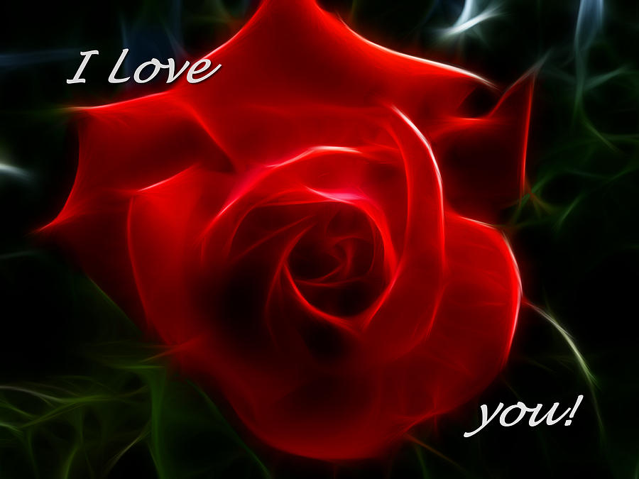 I Love You Red Rose Photograph by Cindy Wright