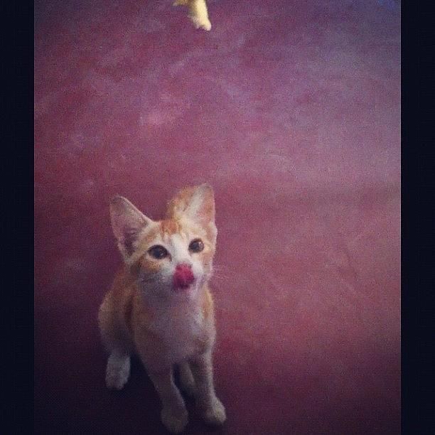 Pussy Photograph - I Luv Omelet..... #cat #cats by Mohamed Athnab