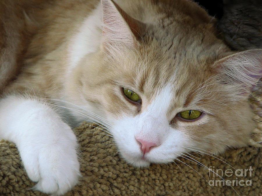 Cats Photograph - I Miss You by Ellen Cotton