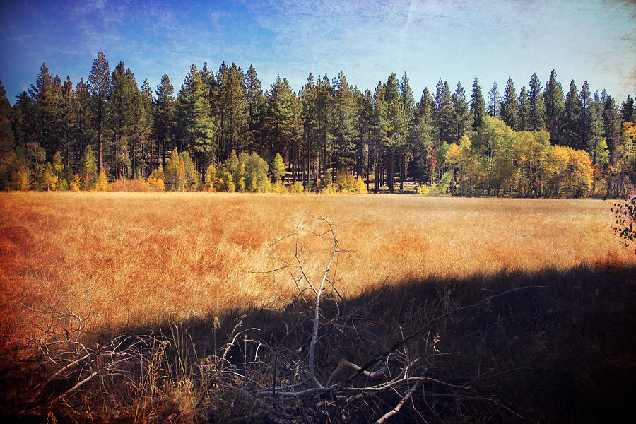 South Lake Tahoe Photograph - I Roam by Laurie Search