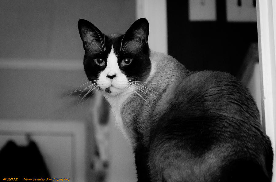 Cats Photograph - I See You by Dan Crosby