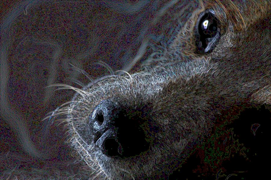 Austalian Cattle Dog Photograph - I See You by One Rude Dawg Orcutt