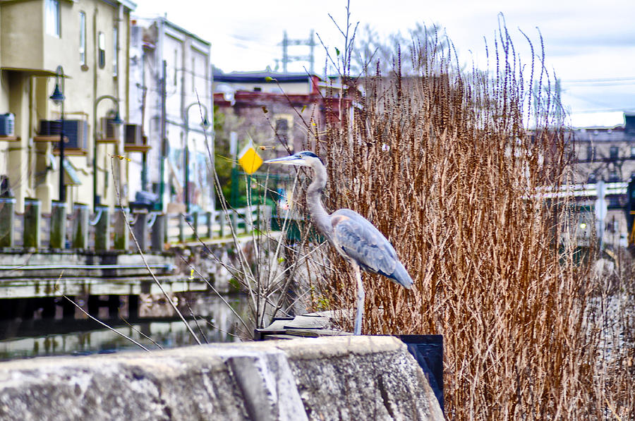 Blue Heron Photograph - I Should Have Went To Florida by Bill Cannon