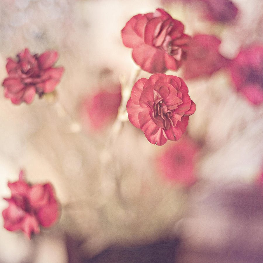 Floral Photograph - I Still Believe by Joel Olives