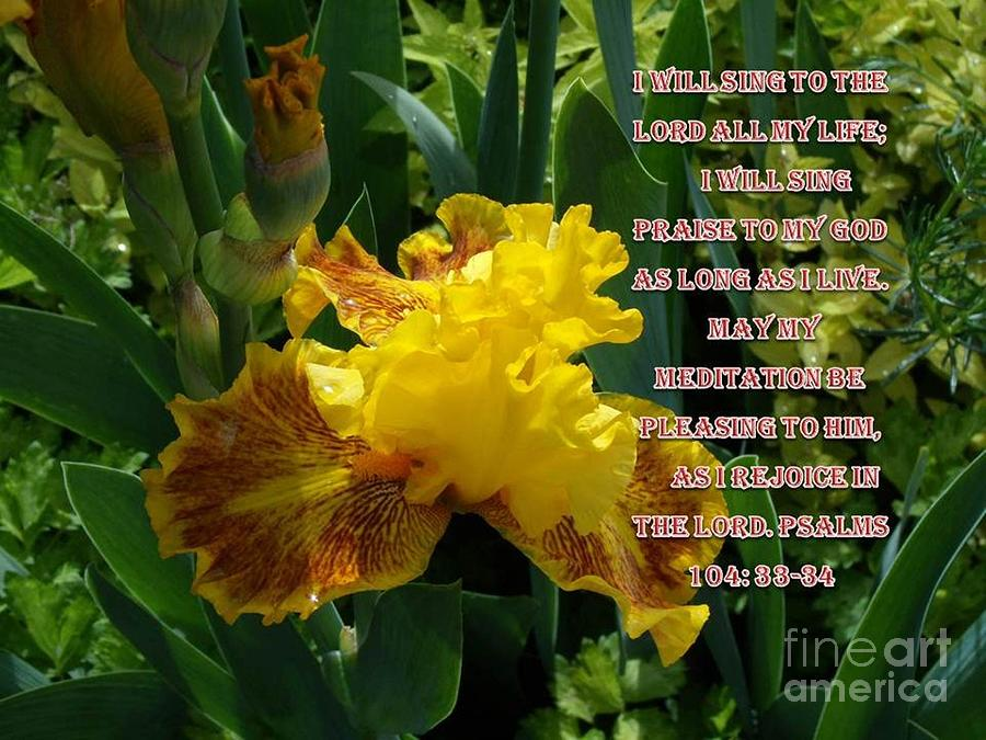 Psalms 104; Psalms; Irises Photograph - I Will Sing To The Lord by Donna Parlow