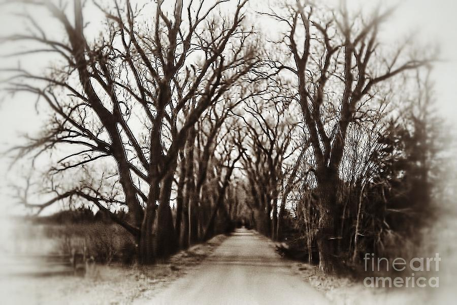 Dirt Road Photograph - I Wouldnt Go Down There by Jeremy Linot