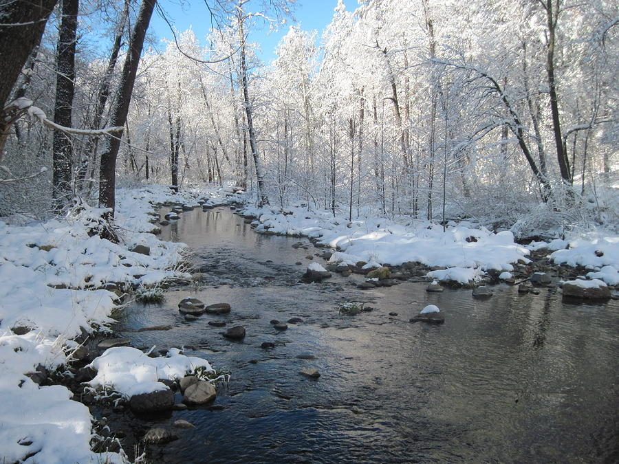 Creek Photograph - Icing On The Trees by Sandy Tracey