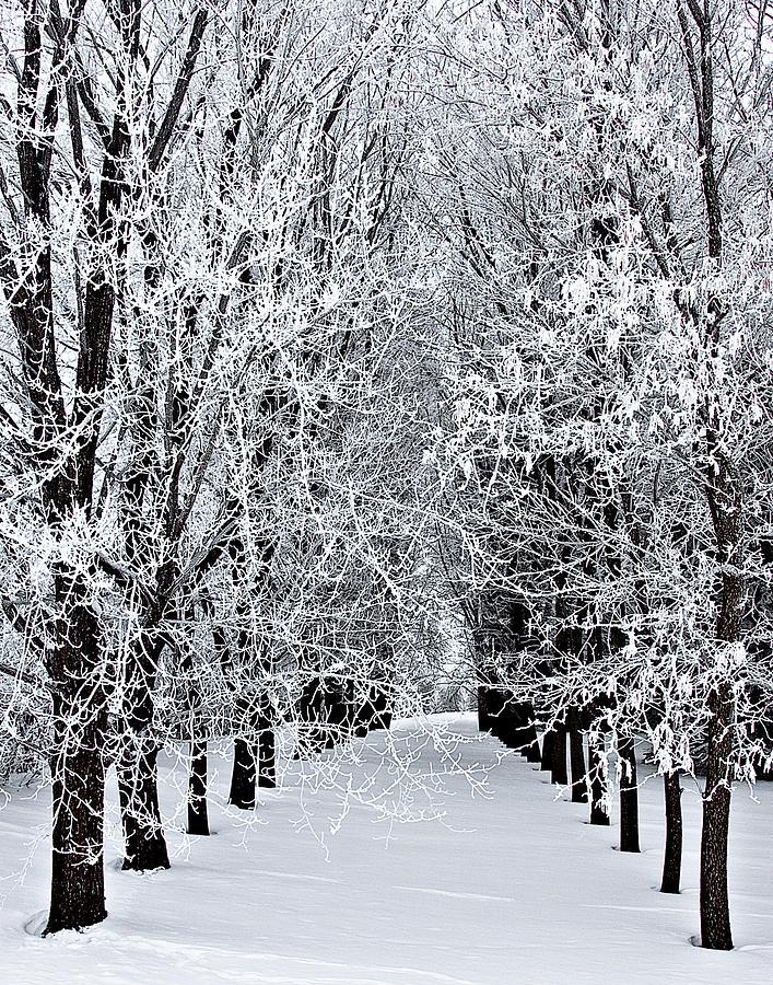 Frost Photograph - Icy Gateway by David Wynia