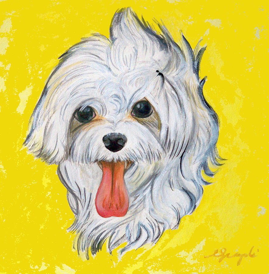 Maltese Painting - Icy The Maltese by Ann Marie Napoli
