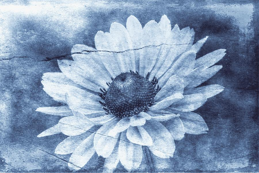 Flower Photograph - If Daisies Wore Blue Jeans by Christine Annas
