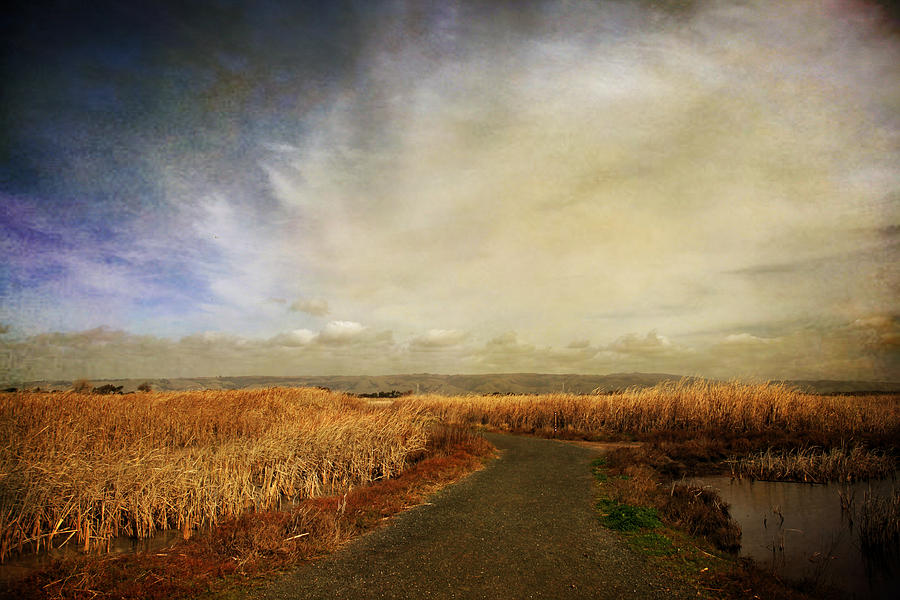 Landscape Photograph - If I Could See Into The Future by Laurie Search