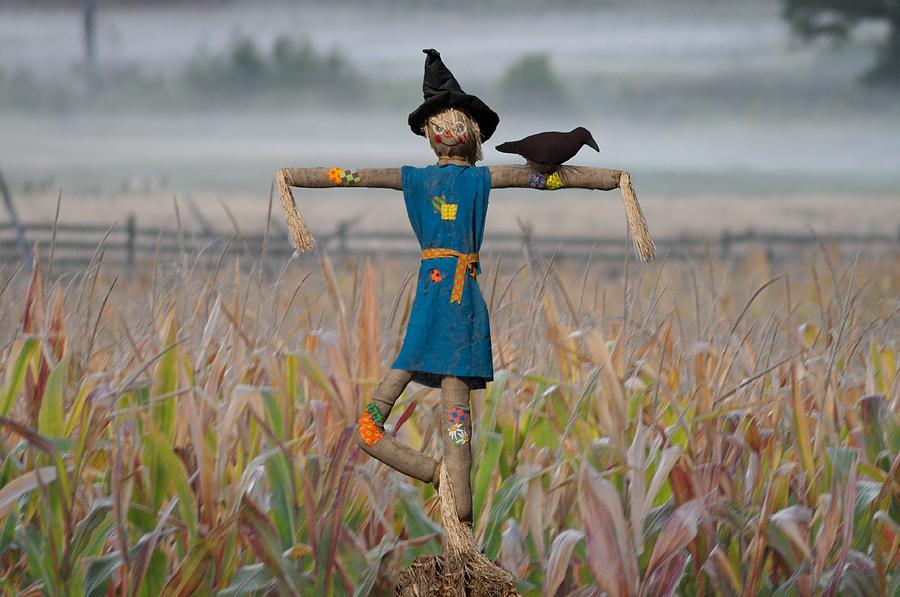 Scarecrow Photograph - If I Only Had A Brain by Bill Cannon