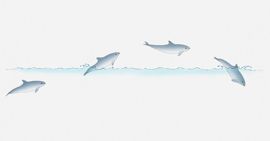 Illustration Of A Dolphin Leaping Out Of Water And Back In, Multiple Image Digital Art by Dorling Kindersley