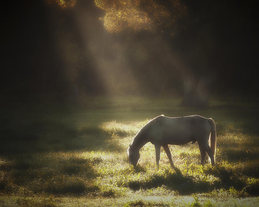 Horse Photograph - Ilumination by Ron  McGinnis