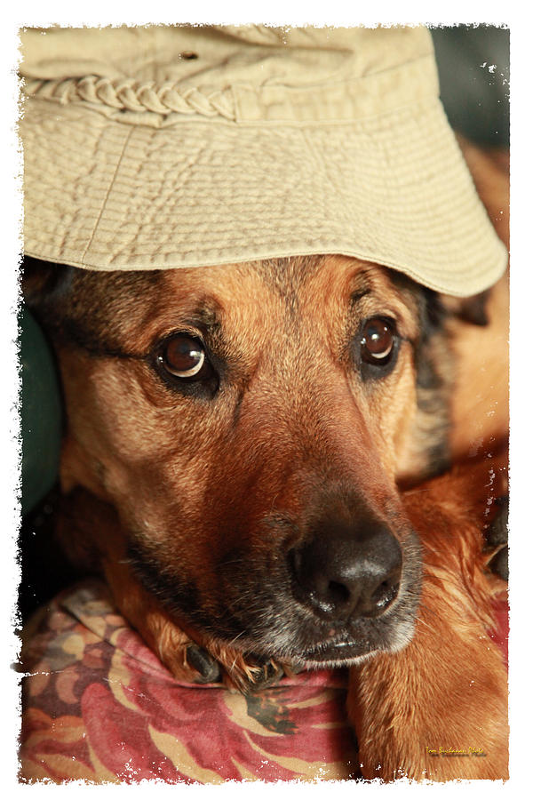 Dog Photograph - Im Hiding From You by Tom Buchanan