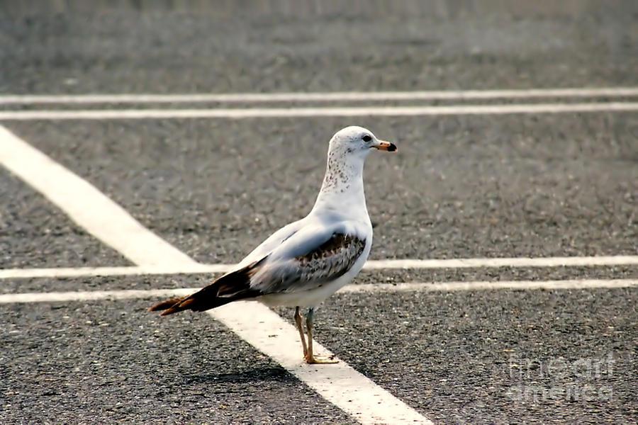 Seagull Photograph - Im Saving This Spot by Susan Stevenson