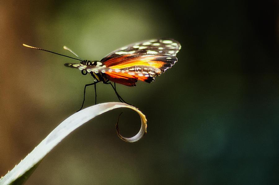 Butterfly Photograph - Im Shy by Rita Fuller