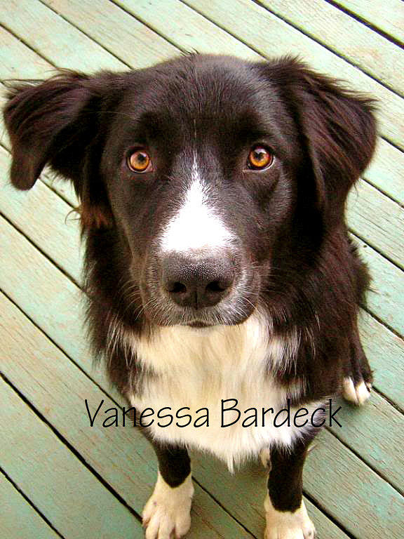Dog Photograph - Im Sorry by Vanessa Bardeck