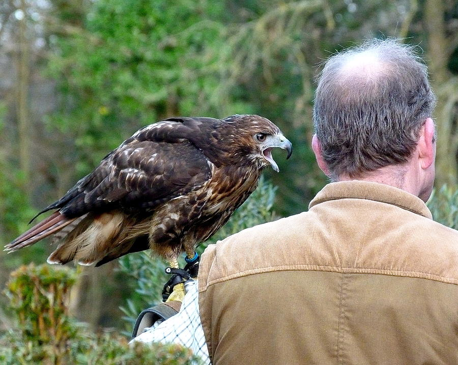 Bird Of Prey Photograph - Im Talking To You by Karen Grist