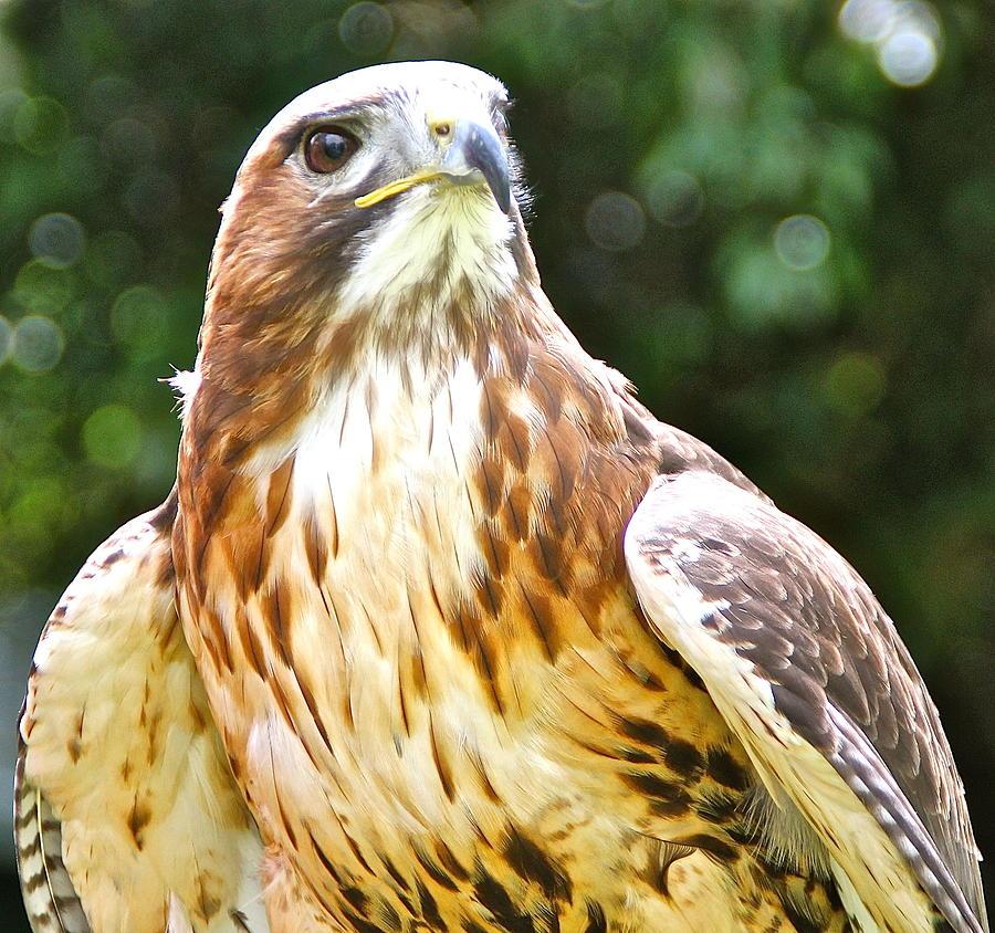 Wildlife Photograph - Im Watching You. by Karen Grist