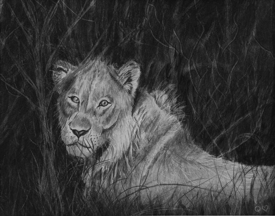 Lion Drawing - Im Watching You by Quwatha Valentine