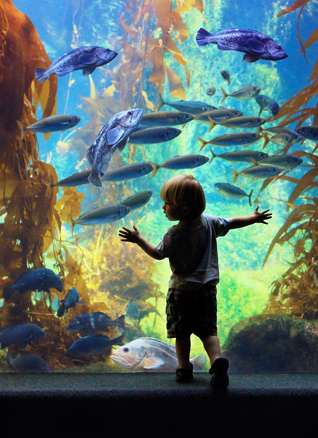 Aquarium Photograph - Immersion  by Donna Pagakis