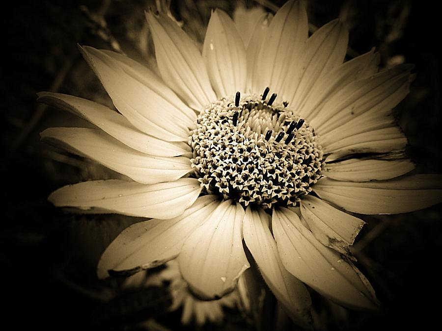 Imperfection Photograph - Imperfection by Beth Akerman
