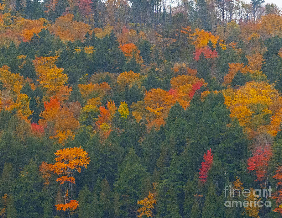 Autumn Leaves Photograph - Imprssions Of Autumn by Charles  Ridgway