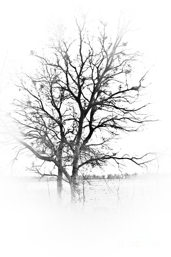 Tree Photograph - In Black And White by Kim Henderson